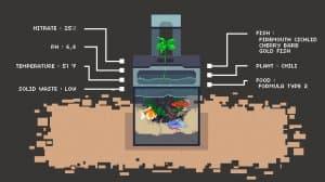 Aquaponics Life